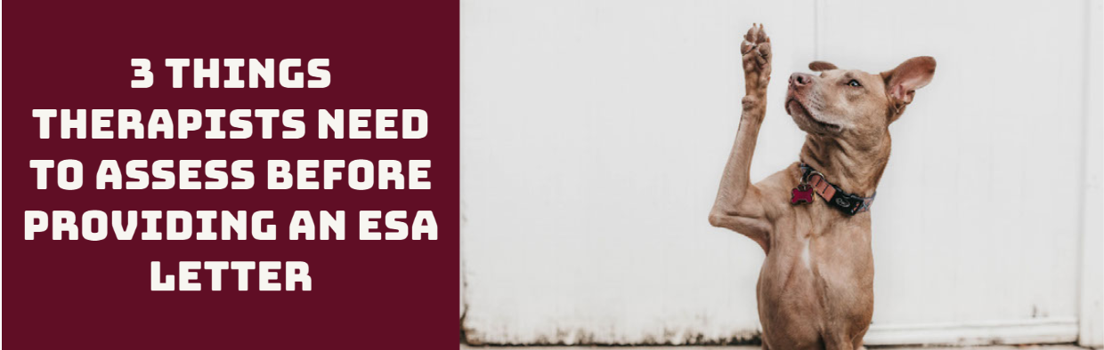 3 Things Therapists Need to Assess Before Providing an ESA Letter Blog